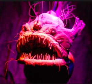 1-anglerfish